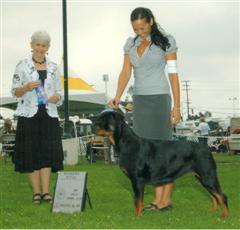 west coast rottweilers